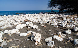Field of white rocks and corals on the northern end of Kaunaoa b Royalty Free Stock Photography