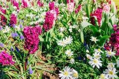 field wild blommor Arkivbilder