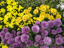 field wild blommor Royaltyfri Foto