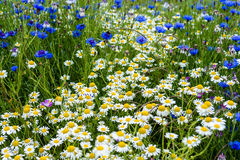 A field of wild colourful country flowers and plants Stock Images