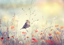 Field with wild flowers and a bird Stock Photography
