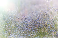 Field of wild flowers - daisy Stock Images