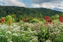 Field of Wild Flowers. On organic Vermont Farm stock photos