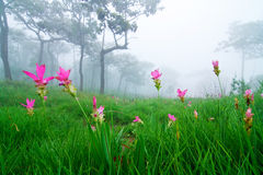 Field of wild flowers in the mist Royalty Free Stock Photo