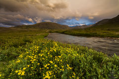 Field with wild flowers and mountains Stock Photos