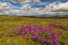 Field with wild flowers and mountains Stock Photography