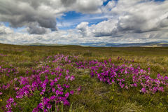 Field with wild flowers and mountains Royalty Free Stock Images