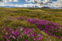 Field with wild flowers and mountains Stock Photo