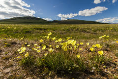 Field of wild flowers and mountains on the background. Stock Images