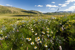 Field with wild flowers and mountains on the background. Stock Photos