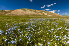 Field with wild flowers and mountains on the background. Royalty Free Stock Photo
