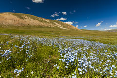 Field with wild flowers and mountains on the background. Stock Images
