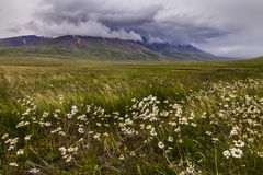 Field with wild flowers and mountains on the background. Stock Photo