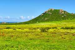 Field of wild flowers next to sea and green mountain Stock Images
