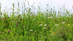 Field of wild flowers. Wild flowers and plants over a sky background stock video footage