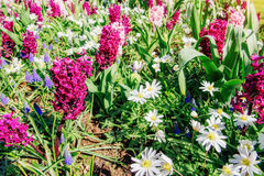 Field of wild flowers. Stock Images