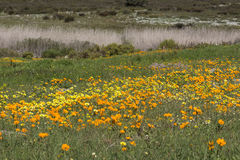 Field of wild flowers in spring Stock Photo