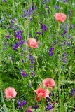 Field of wild flowers Stock Image
