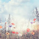 Field with wild flowers Royalty Free Stock Image