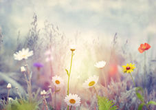 Field with wild flowers Stock Photo