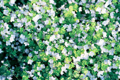Field of wild flowers. Top view of field of small wild flowers Royalty Free Stock Images