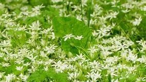 Field of wild flowers stock video