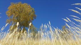 Field of wild grass, Bran-Moeciu, Romania Stock Photo