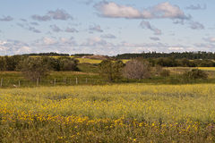 Field of wild grass and flowers in summer Royalty Free Stock Image