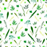Field wild grass leaves and twigs seamless pattern, white backgr. Ound. Green plant natural decorative element vector background Stock Image