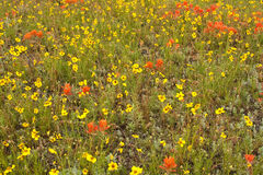 Field of Wildflowers Royalty Free Stock Photography