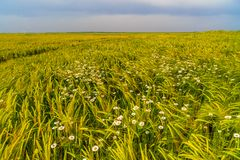 Field with wildflowers Royalty Free Stock Photos