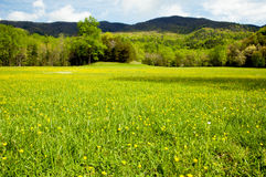 Field of wildflowers in bloom in the Smokies. Stock Images