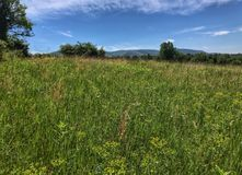 A field of wildflowers and gentle mountains in the distance Royalty Free Stock Photos