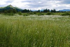 Field with wildflowers. Green grassy field with wildflowers, hills and blue sky Stock Photography