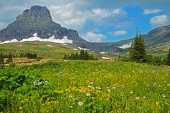 A field of wildflowers grow beneath frozen glaciers in Glacier National Park. Royalty Free Stock Photos