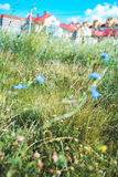field of wildflowers over blurred background of city houses. Selective focus macro shot with shallow DOF Royalty Free Stock Photography