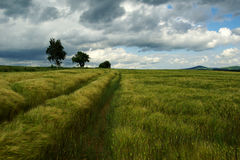 Field in wind. Rye field in wind,before storms Royalty Free Stock Photo
