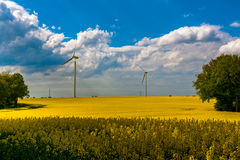 Field wind mill turbines farm landscape rape Stock Image