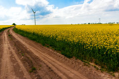Field wind mill turbines farm landscape rape Stock Photography