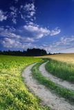 Field Winding Way. Field way, blue sky with the clouds Royalty Free Stock Images