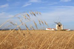 Field and windmill Royalty Free Stock Photo
