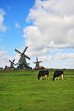 The field with windmills and cow Stock Photography