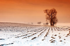 Field in Winter. Empty field covered with snow in winter Stock Photo