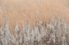 Field of winter. This is a photograph of a field of winter Royalty Free Stock Photography