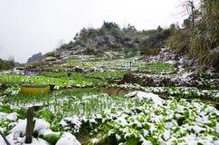 Field in winter Stock Image