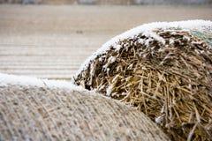 field winter Royaltyfri Foto