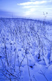 Field in winter Royalty Free Stock Images