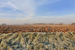 Field in winter. Agricultural land covered with frost in winter Royalty Free Stock Images