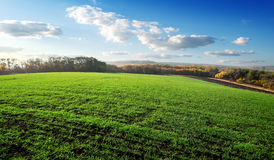 Field of winter crops Royalty Free Stock Image