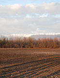 Field in Winter, Friuli Stock Photo